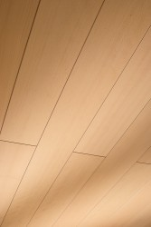 Стеновые панели шпонированные Meister Madera 200 019 Бук